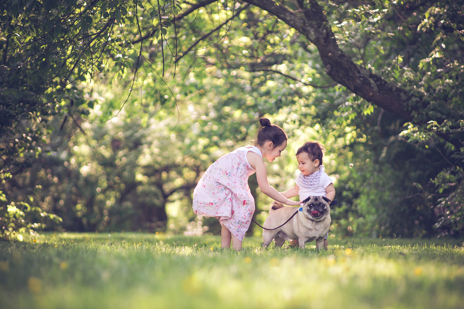 baby with pet pug dog | Tonya Teran Photography - Rockville, MD Newborn Baby and Family Photography