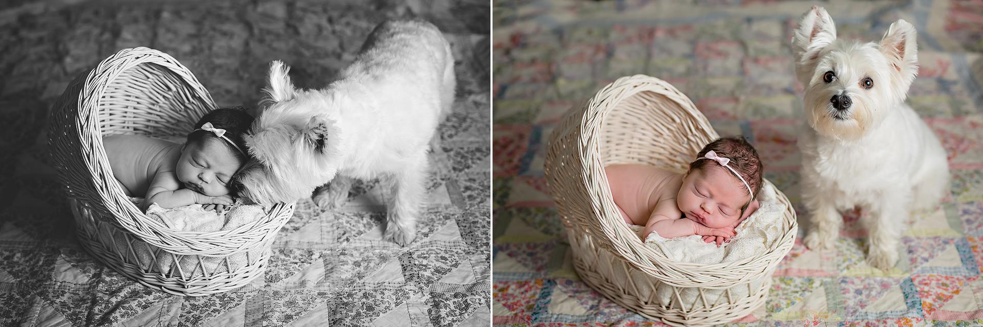 Sleeping newborn and dog pose - Tonya Teran Photography - Bethesda, MD Newborn Baby and Family Photographer