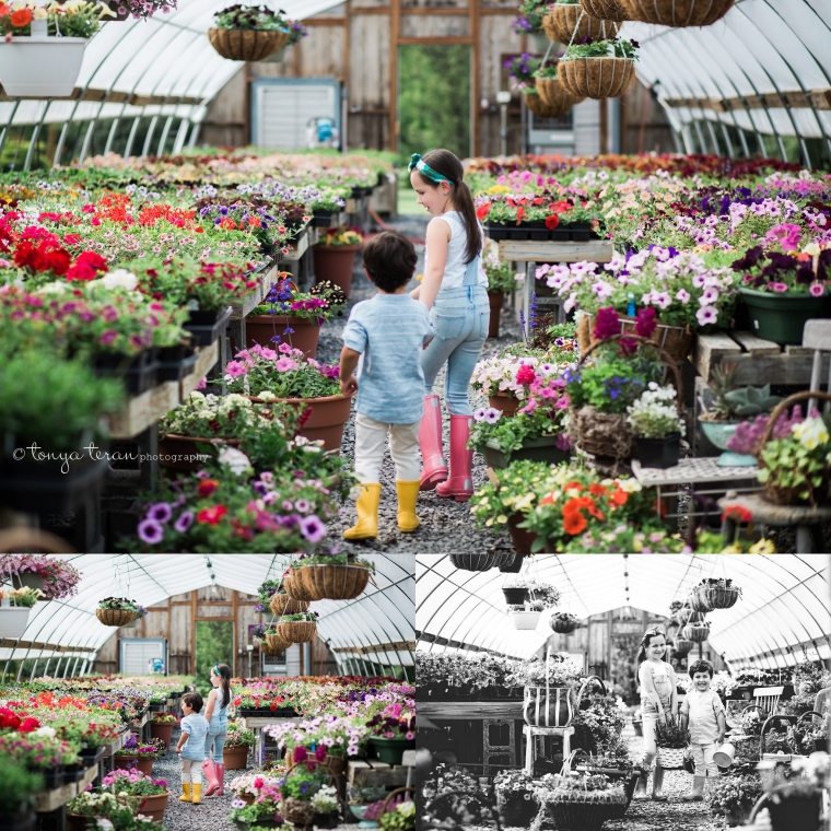 ... Spring Flowers Greenhouse Session | Tonya Teran Photography, Frederick, MD Newborn, Baby and